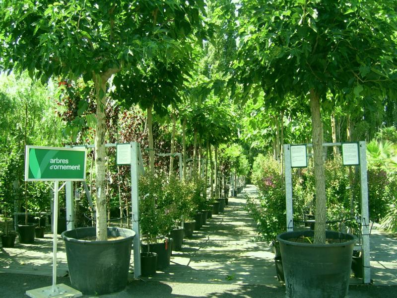 arbres et arbustes d ornement