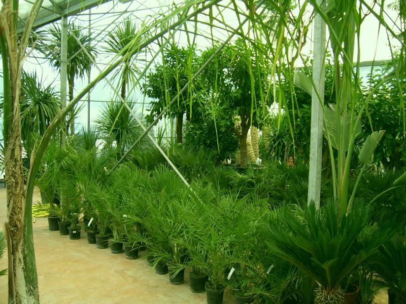 palmiers cycas à toulon